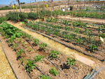 How to plan a drip irrigation system ebay