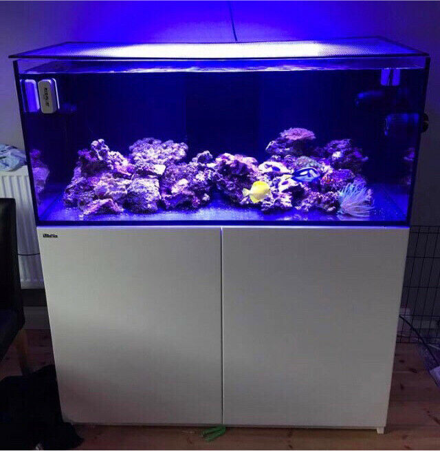 Cat Cage Gumtree Red Sea Reefer 350 White In Plymouth Devon Gumtree