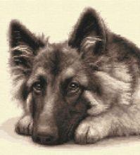 German Shepherd Puppy | eBay