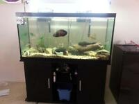 90 and 20 gallon fish tanks plus accessories and fish!