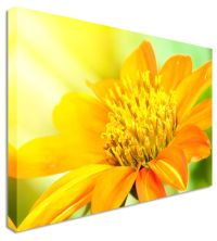 Large DAHLIA Yellow Bloom - Floral Flower Canvas Wall Art ...
