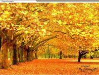Golden Leave Autumn Landscape Full Wall Mural Print Decal ...