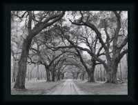 Oak Arches by Jim Black White Photography Framed Art Print ...