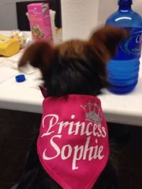 Custom Personalized Dog Bandana / Scarf. Tie Scarf