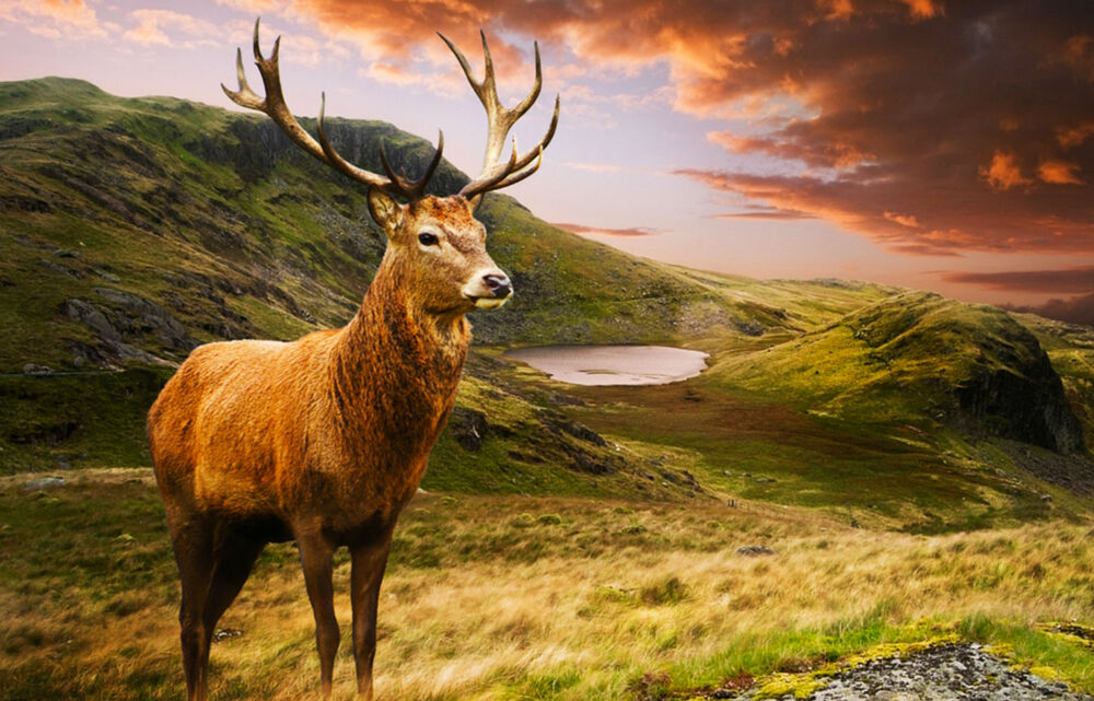 Majestic Fall Wallpaper Framed Print Highland Stag In The Scottish Mountains
