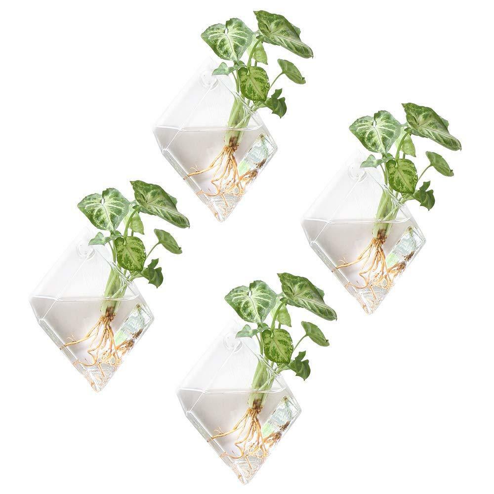 Air Plant Wall Holder Mkono 4 Pack Glass Wall Mounted Plant Terrariums Air Plant Holder Indoor Hanging 6432116937330 Ebay