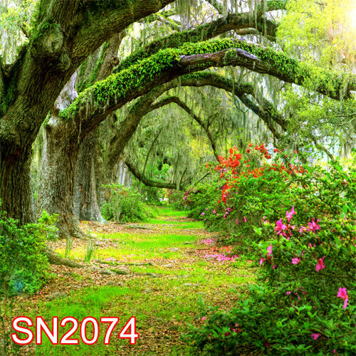 Ebay 3d Wallpaper Photo Outdoor Spring Forest 10x10 Ft Cp Photo Scenic Background