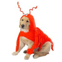 Casual Canine Lobster Paws Dog Halloween Costume Pet