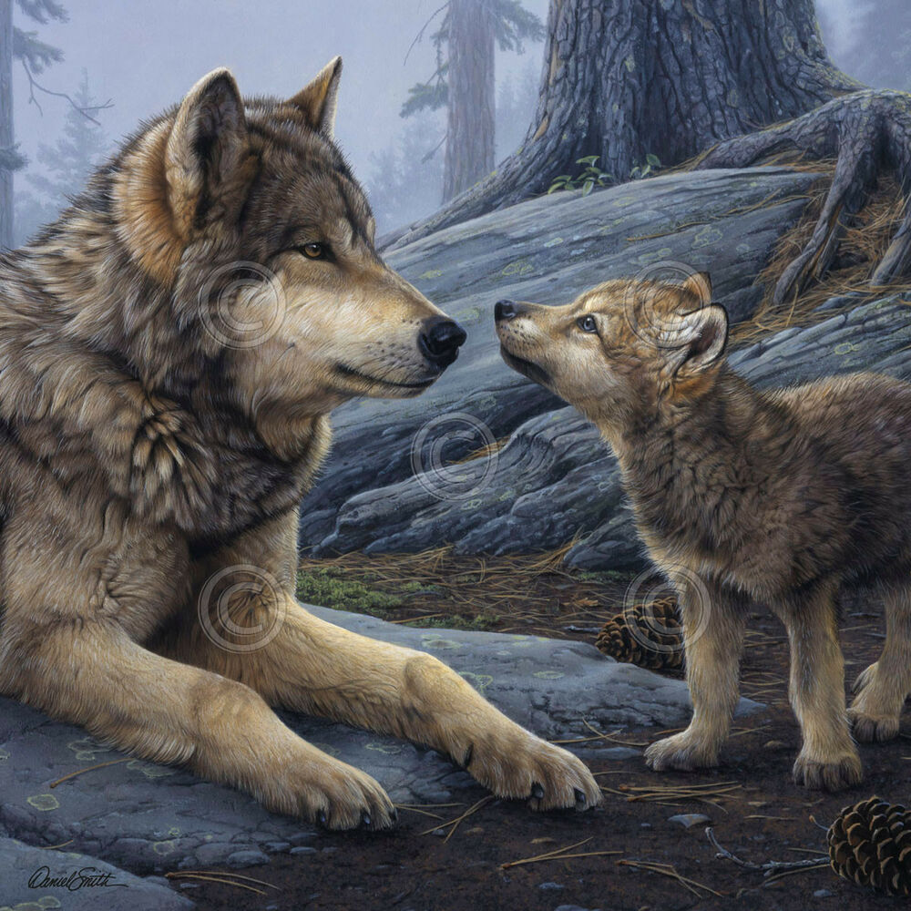 1000 Wallpapers Cute Wolf Art Print Brother Wolf Detail Daniel Smith 24x24