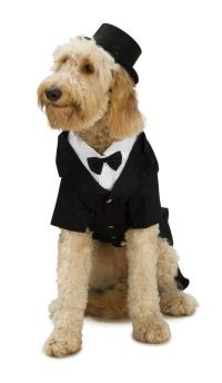 Pet Dog BLACK SUIT TUX Costume Dog Dress up Costume | eBay
