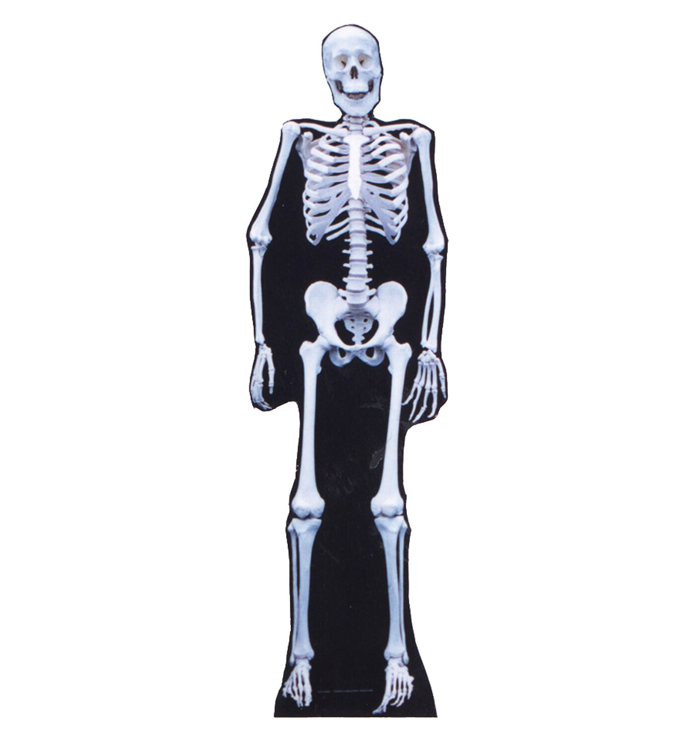 SKELETON HALLOWEEN DECORATIONS LIFESIZE CARDBOARD STANDUP