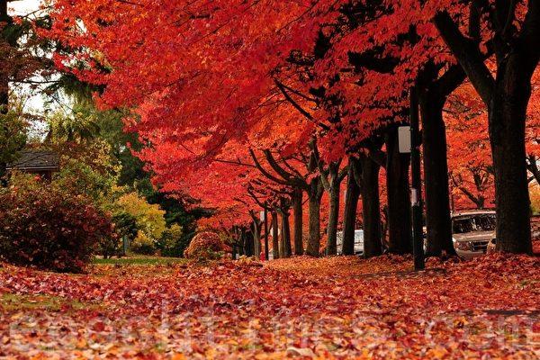 Free Fall Nature Wallpaper 組圖:規劃賞楓行程 加拿大處處是美景 楓葉 秋天 大紀元