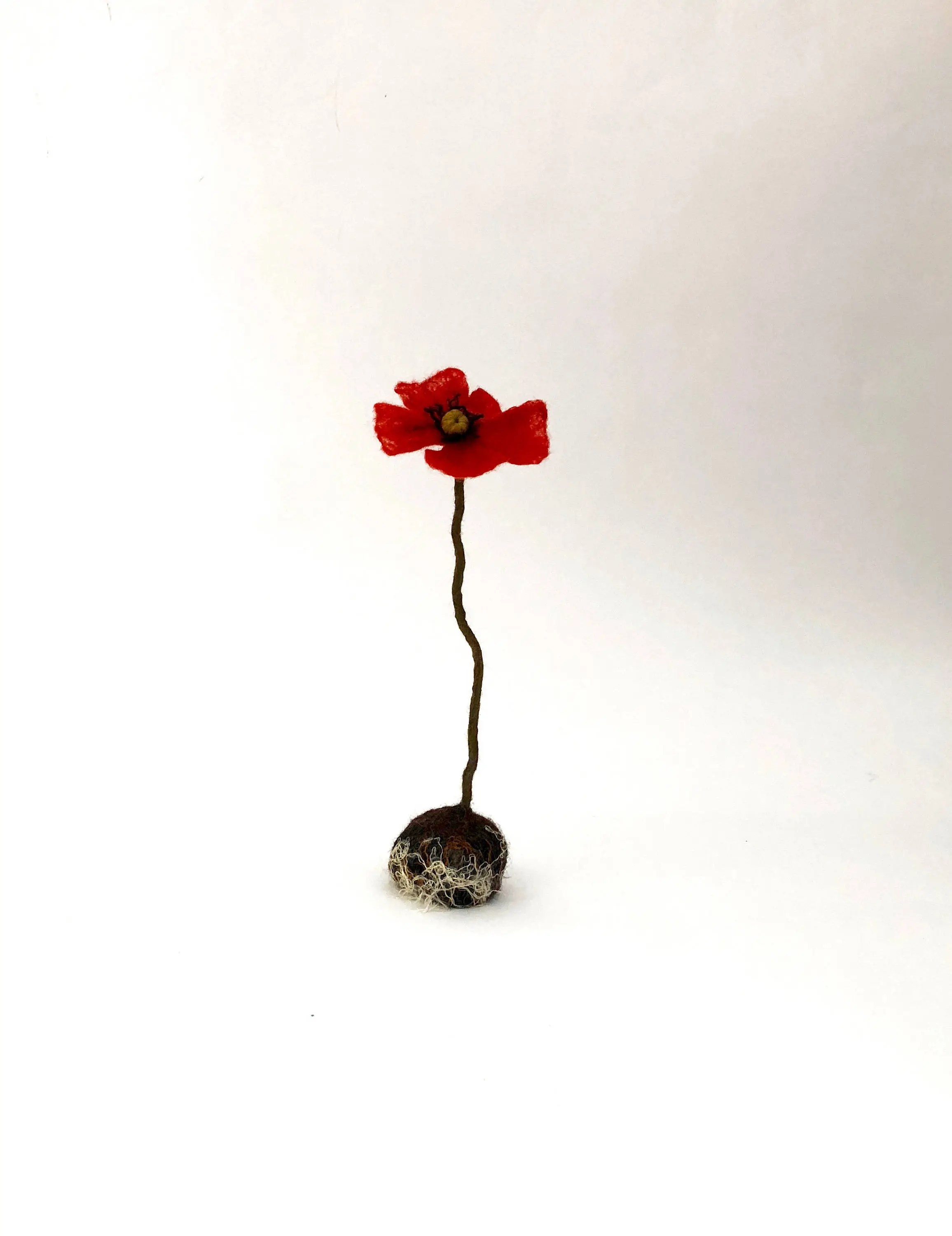 Porte Vetement But Felted Poppy With Soil And Roots Solitaire Red Flower Artificial Botanical Plant Urban Garden Symbol In Flanders Fields