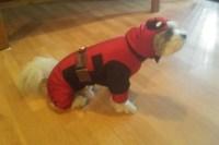 Deadpool Dog Costume & Dog Costume Pumpkin Dog Costume For ...