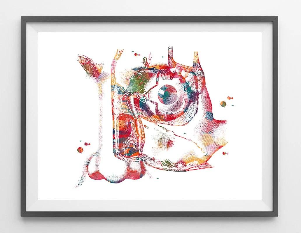 Lacrimal Apparatus Eye anatomy Art Print human eye watercolor Etsy