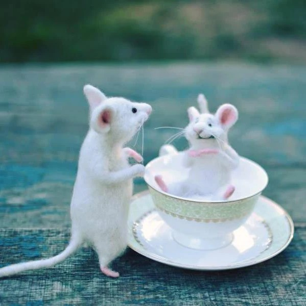 White mice Mouse in the cup Cute mouse Mouse on the kitchen Etsy
