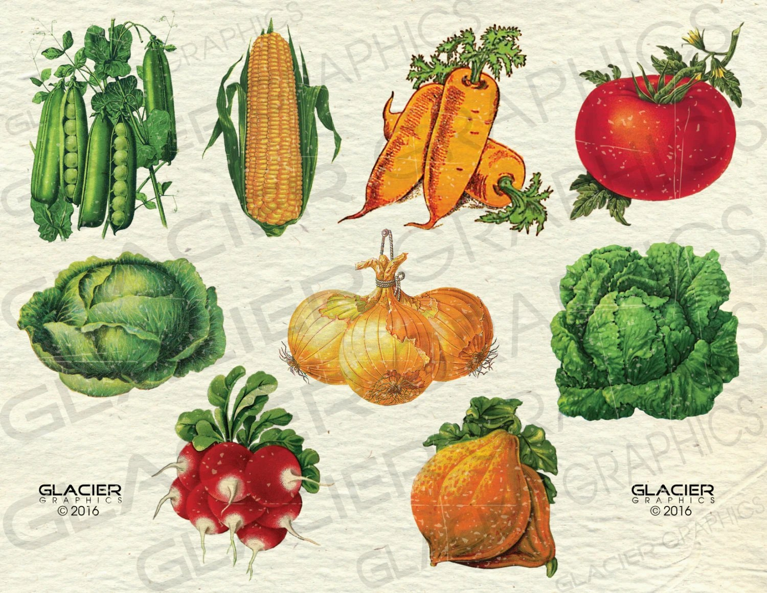 Vintage Farm Vegetable Seed Packet Illustrations Color ClipArt Etsy