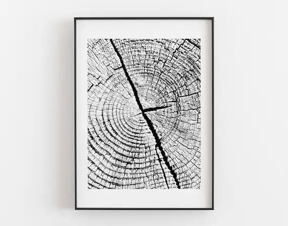 Tree Ring Tree Ring Prints Black and White Prints Nature Etsy