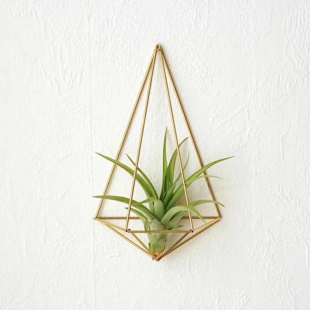 Air Plant Wall Holder Air Plant With Wall Holder Plant Wall Sconce Wall Planter Wall Decoration Air Plant Container Home Decor Gift Himmeli Polyhedron No02