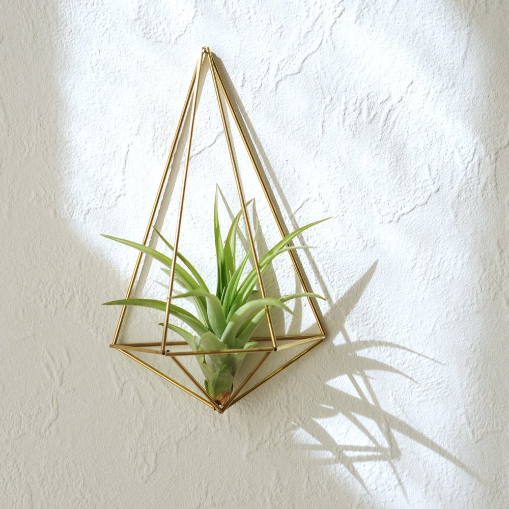 Air Plant Wall Holder Air Plant Wall Holder Plant Lovers Gilft Wall Sconce Air Plant Container Unique Gift For Wife Himmeli Polyhedron No02