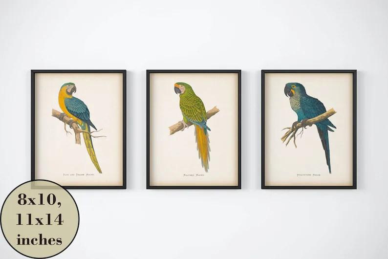 Vintage bird print set Set of 3 parrot prints Printable bird Etsy