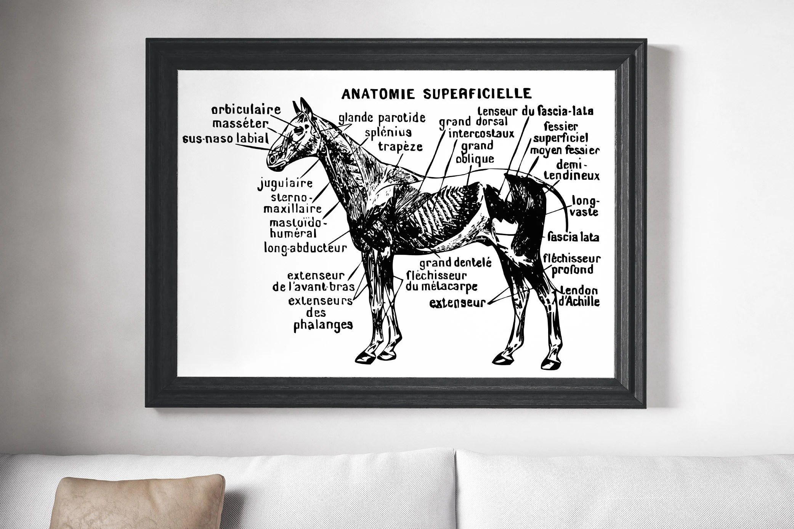 Horse Decor Vintage Horse Art Download Horse Printable Wall Etsy