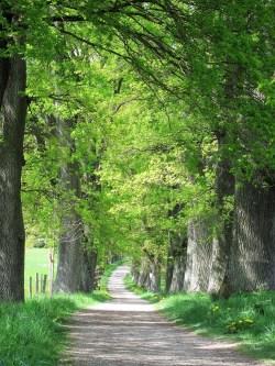Small Of Laurel Oak Tree