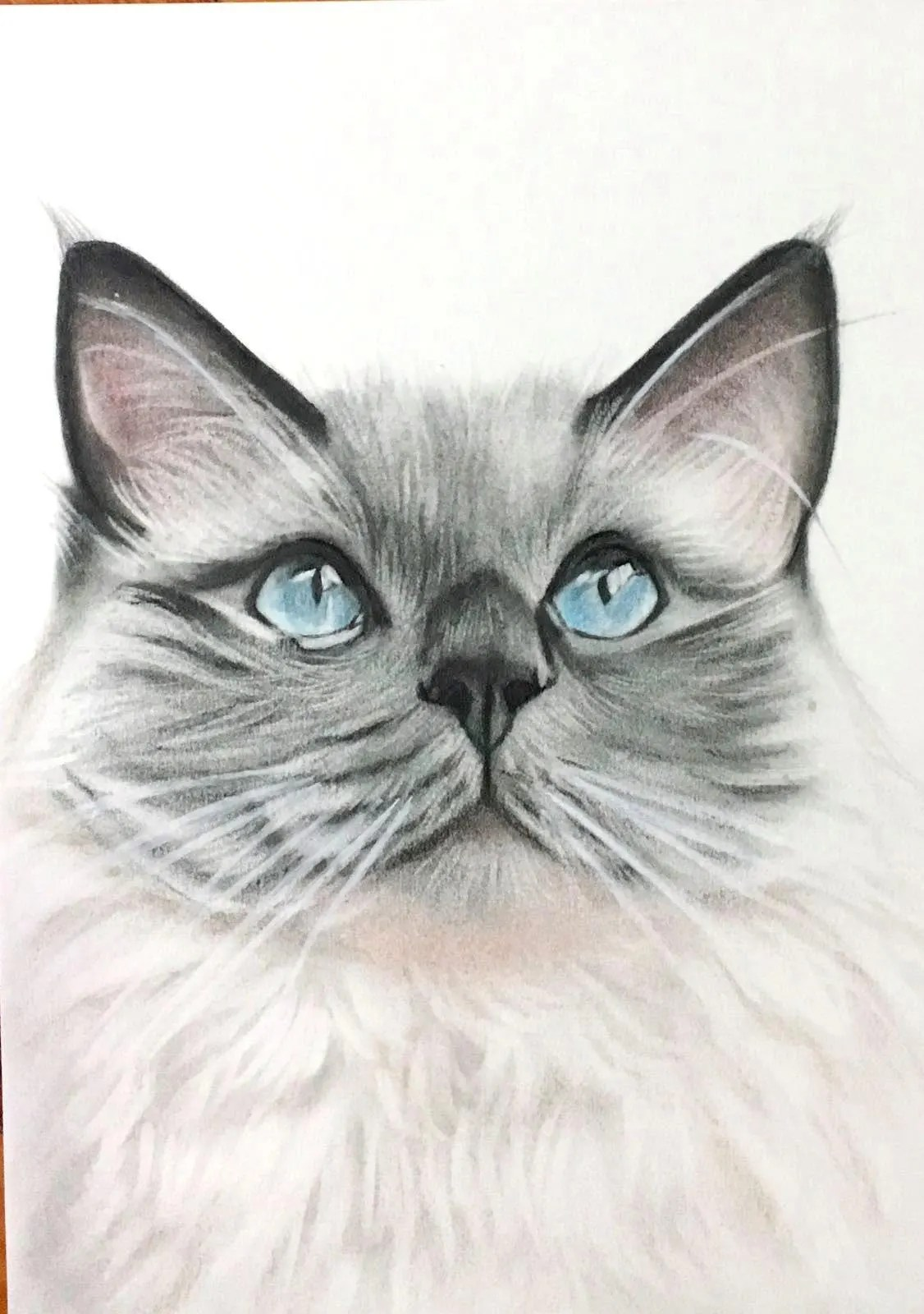 Gattia Baños Pet Portrait Custom Pet Portrait Cat Drawing From Photo Custom Cat Portrait Personalized Cat Drawing Custom Pet Drawing Pet Gift Cat Lovers