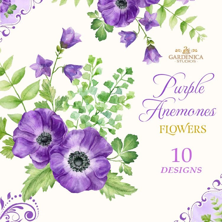 Watercolor Purple Flowers Anemone Clipart Purple Flower Etsy