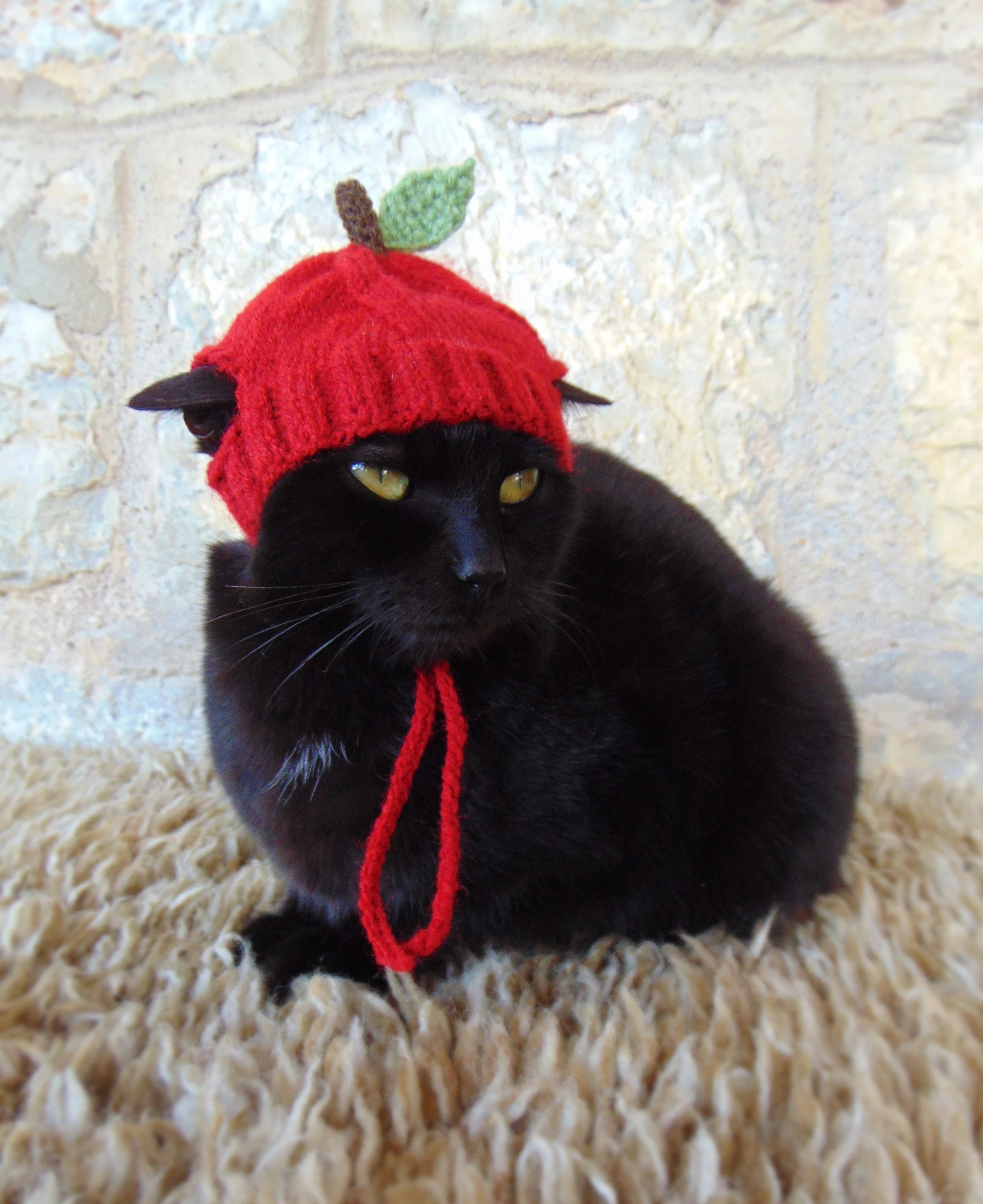 Apple Hat for Cat Apple Pet Costume Cat Outfit Feline Etsy