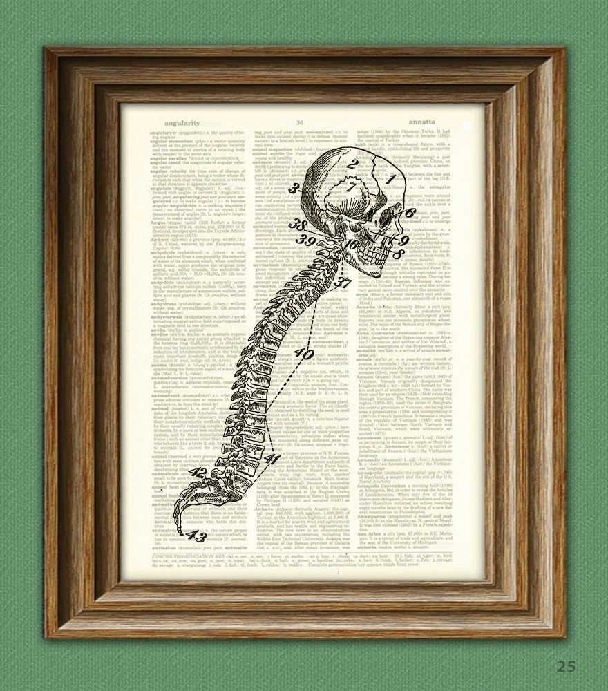Cool human SKULL and SPINE beautifully upcycled dictionary Etsy