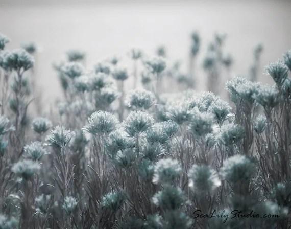 Create 3d Name Wallpaper Online Free Pale Blue Light Desert Flower Photo Nature Photography