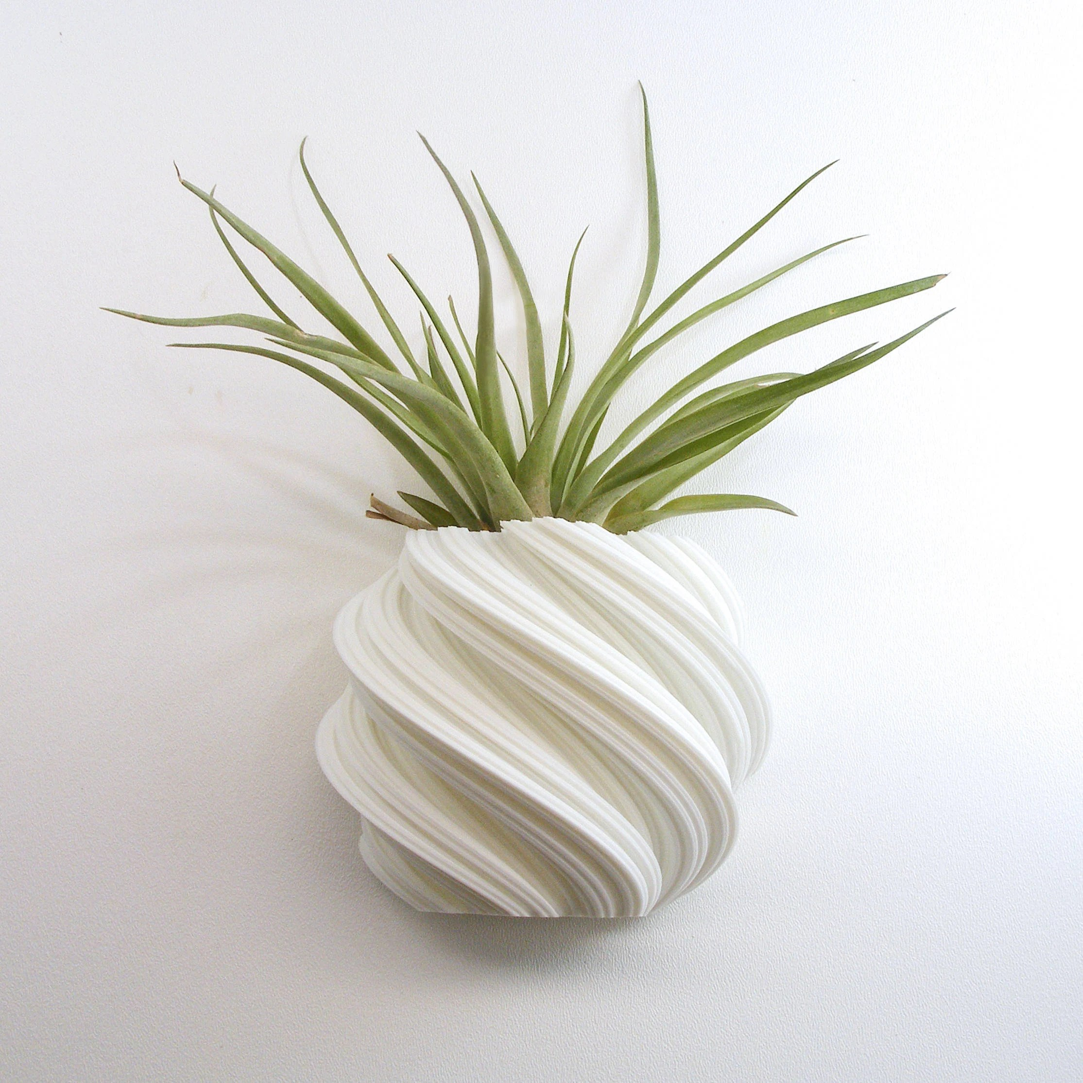 Air Plant Wall Holder Vertical Plant Holder