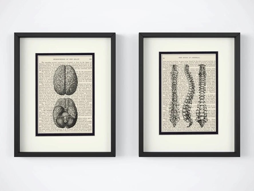 Brain and Spine Vintage Anatomy Book Page Art Print Set of 2 Etsy