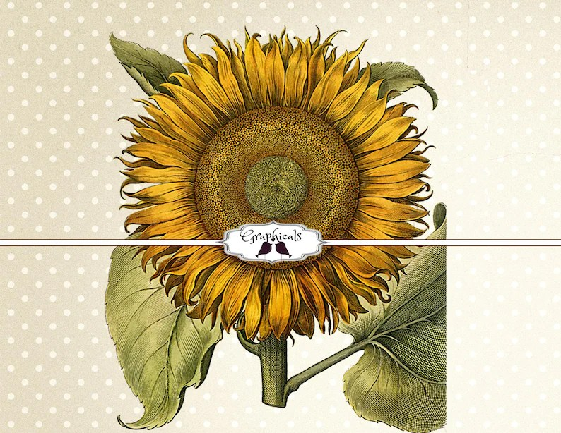 Sunflower printable graphic instant Digital download image for Etsy