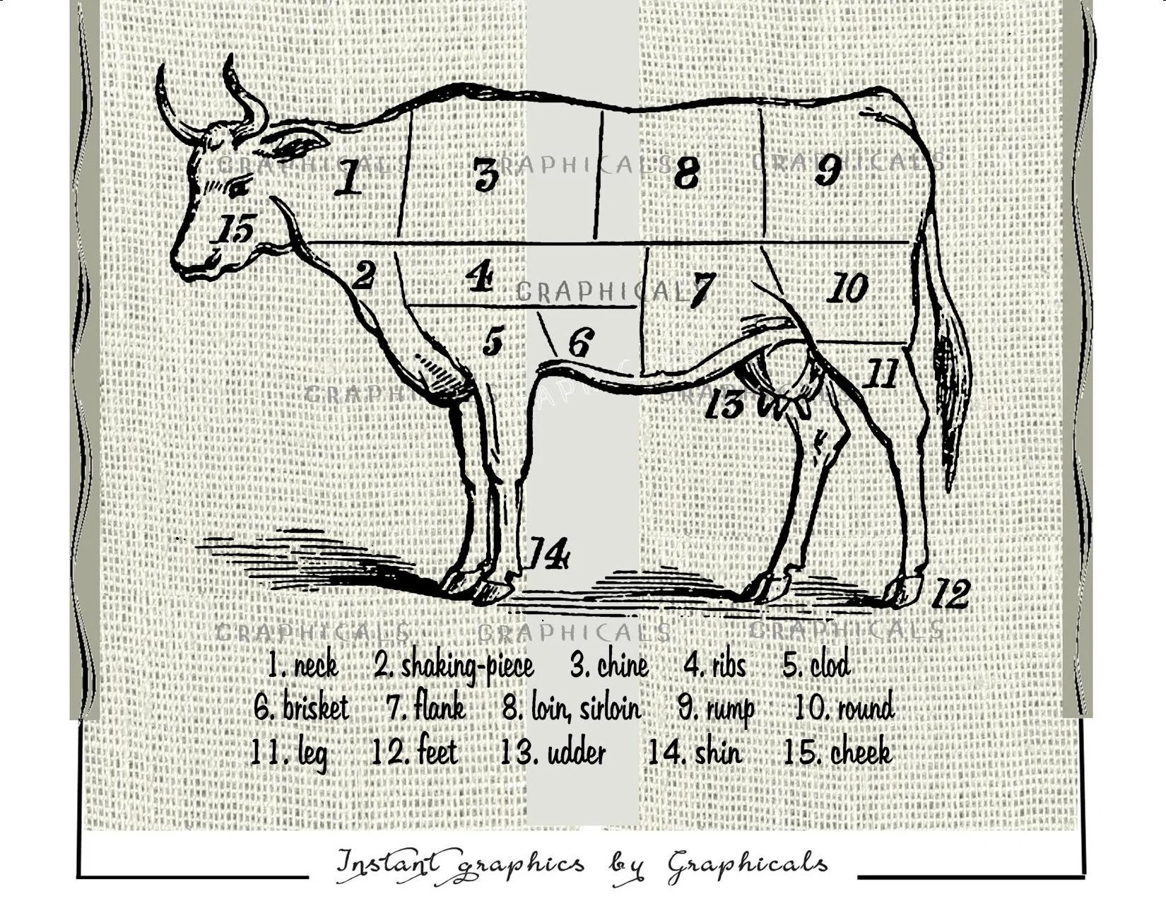 Beef cuts butcher chart instant clip art digital download printable graphic  for iron on fabric transfer Burlap Decoupage Pillow Paper 1735