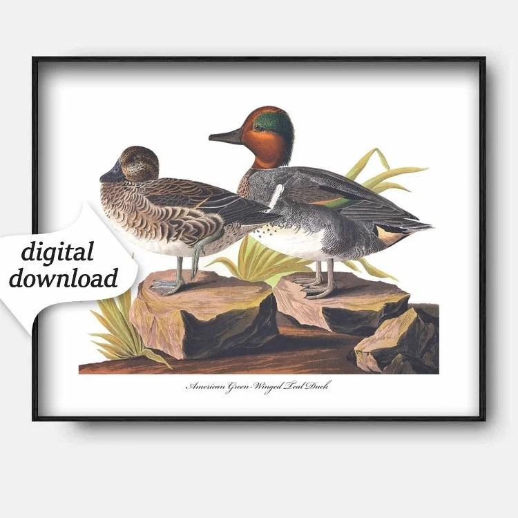 Printable Duck Art Download Birds Audubon Bird Print Etsy