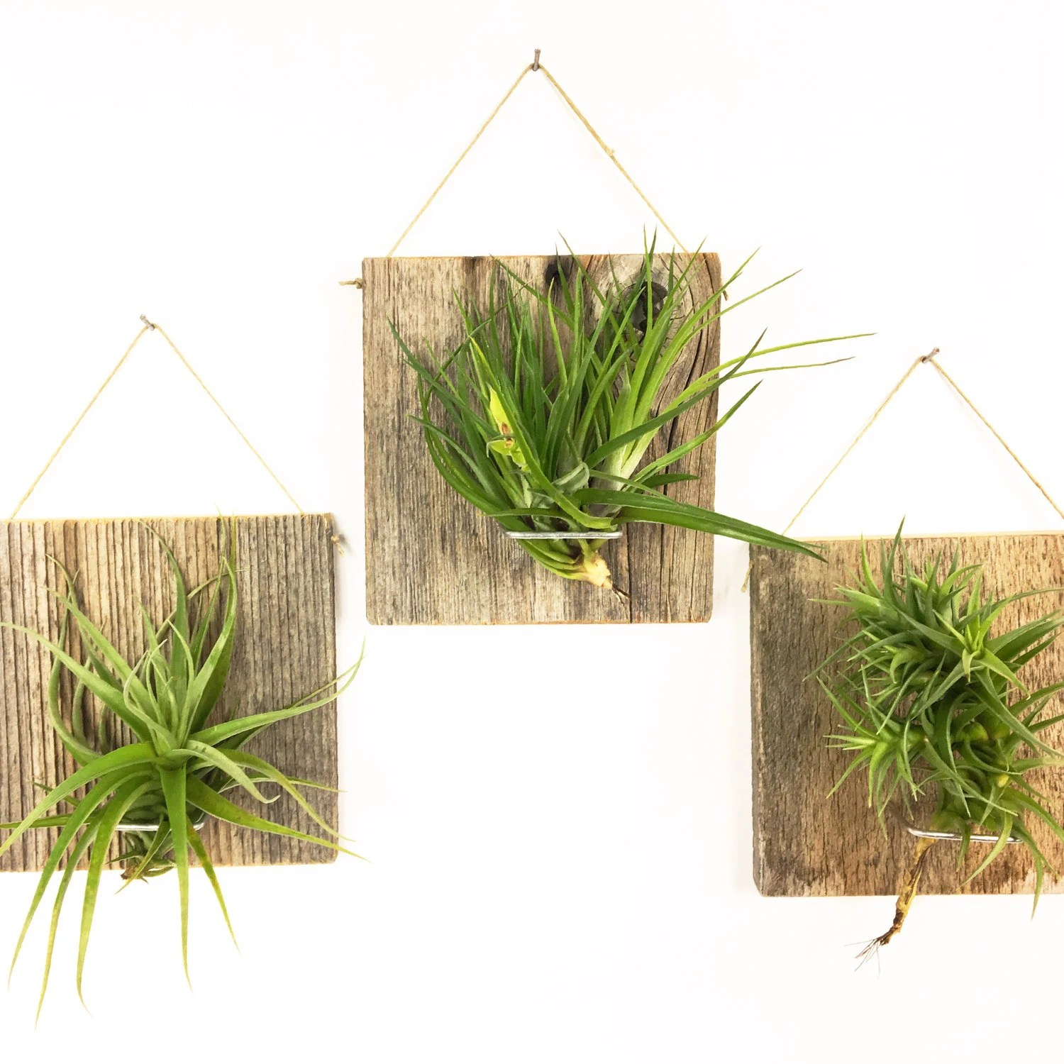 Air Plant Wall Holder Air Plant Wall Hanger Set Of Three Large Form Air Plant Holder Barn Wood Terrarium Planter Box House Plant Plant Lover Gift Ideas