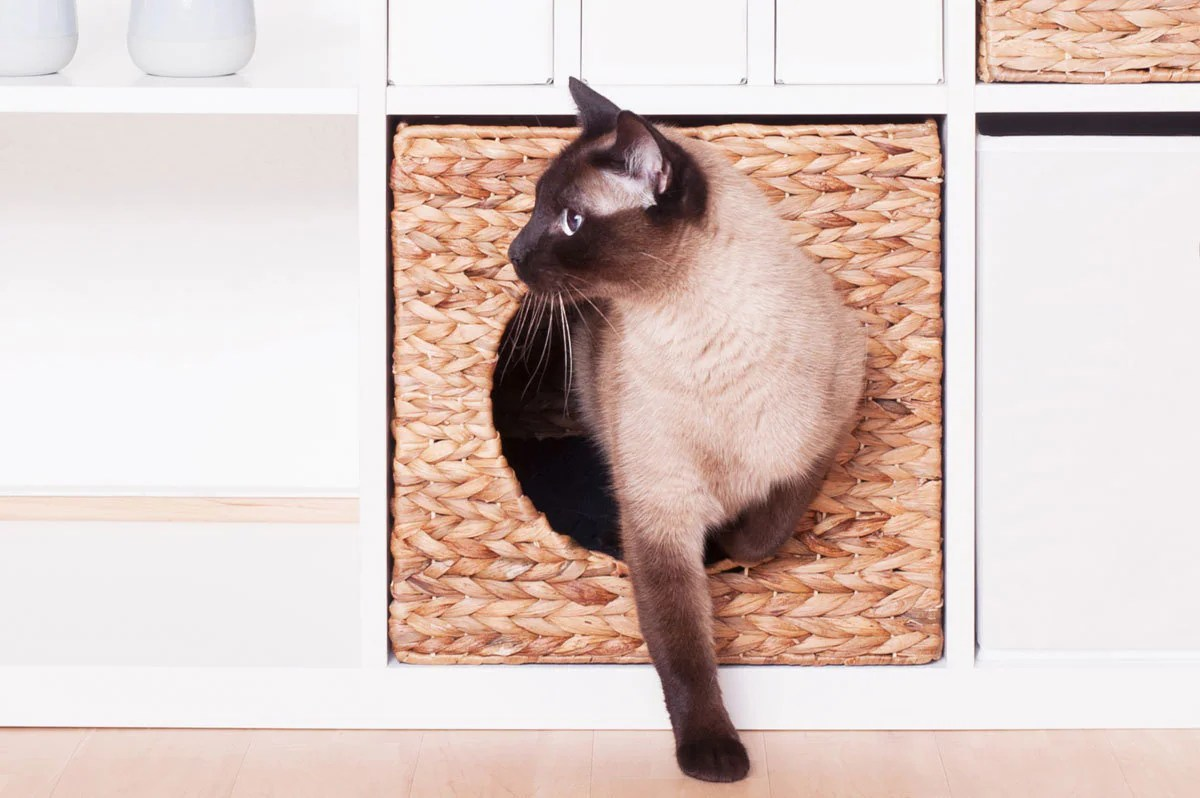 Ikea Expedit Länge Ikea Kallax Expedit Cat Basket 34 X 33 X 33 Cm Natural Basket Of Water Hyacinth Cave Cats Cave Stable For Small Dogs And Cats