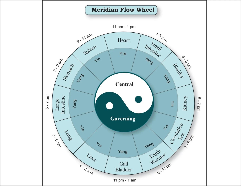 Meridian Hourly Flow Printable Chart Poster Wheel Acupressure Etsy
