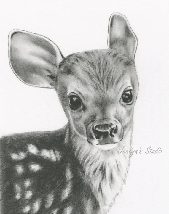 Charcoal Drawing Giclee Print Deer Drawing 8x10 Etsy