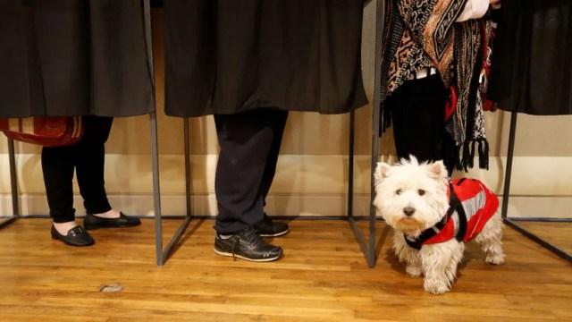 Cette journée est l'occasion pour les photo-journalistes de ruser d'inventivité pour montrer ce qu'il se passe: à savoir des électeurs dans des isoloirs. Mais aussi leurs chiens. C'est traditionnel.