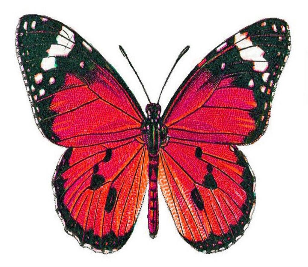 Roter Schmetterling 24 X Pretty Red Admiral Butterflies Edible Cupcake Toppers