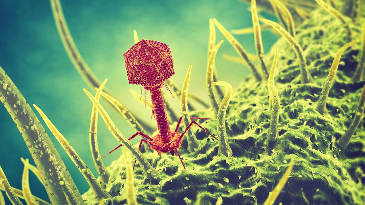 Motherboard Wallpaper 3d A Spotlight Is Hitting The Virus Quot Bacteriophage Quot Known For