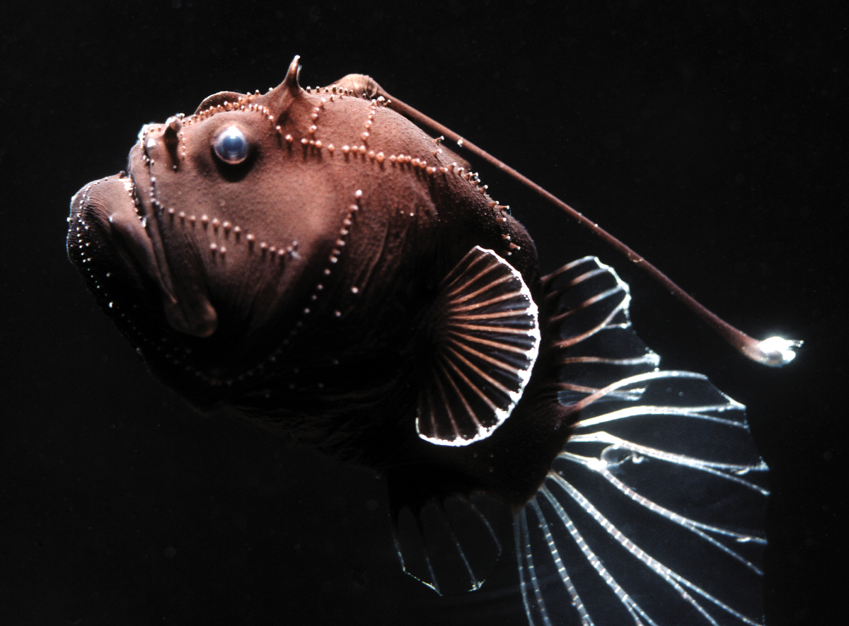 Strange Deep Sea Creatures Video Uh Look The Pictures Of The Most Bizarre Deep Sea