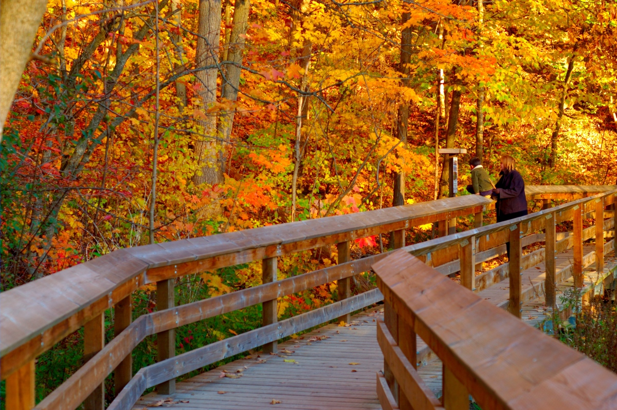 Fall New England Wallpaper Fall Photos In Canada Remind You Why It S The Greatest Season