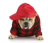 Puppies Wearing Costumes | www.imgkid.com - The Image Kid ...
