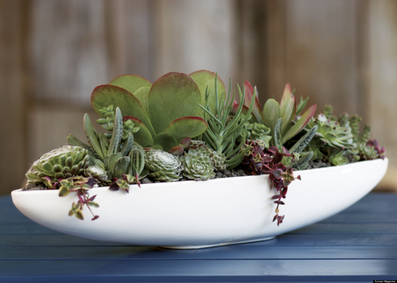 Cool Plants For Your Room Three Cool Garden Projects Kathleen Brenzel