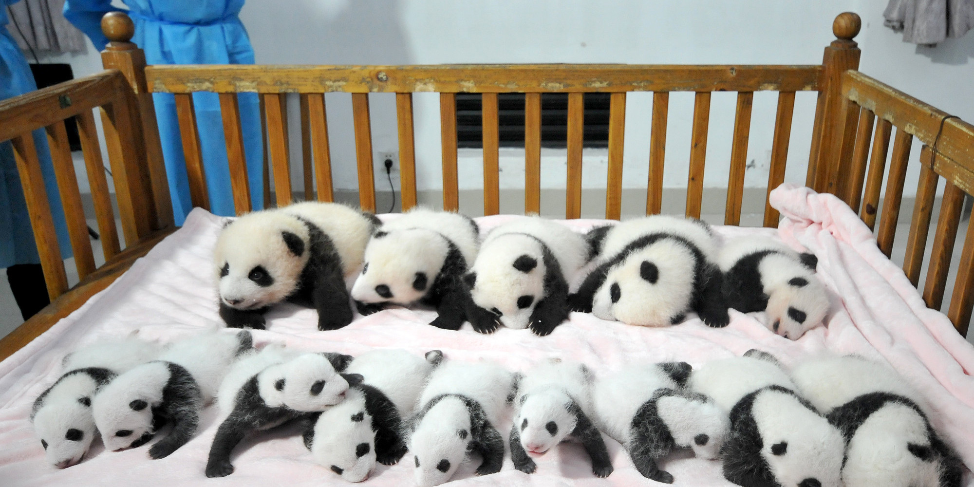 Cute Baby With Parents Wallpaper These 14 Panda Cubs Will Remind You Why The Iconic Bears