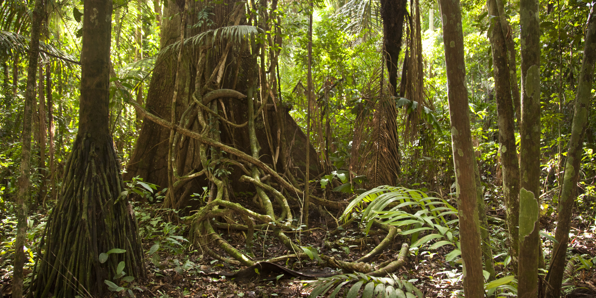 Wild Forest 3d Wallpaper The Amazon Rain Forest Is Drying Out Probably Because Of